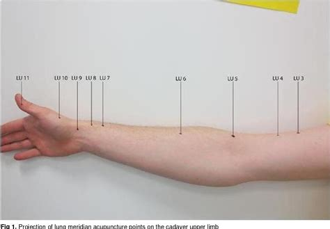 Figure 1 from Anatomical study of potential connection
