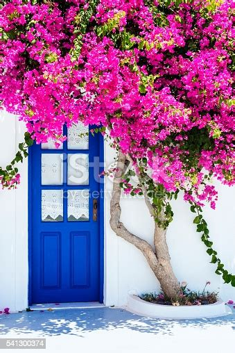 Traditional White Houses Covered With Bougainvillea Flower